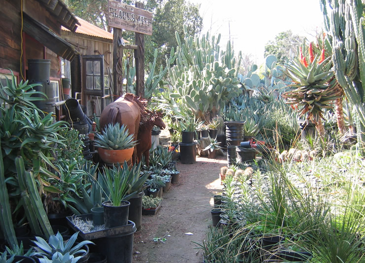 28 Nurseries In Southern California